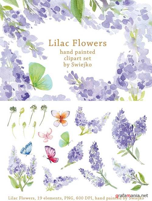 Watercolor Lilac Flowers, Butterfly - 1495576
