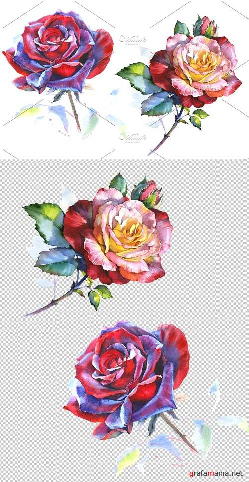 Stunning big red rose PNG watercolor - 2834929