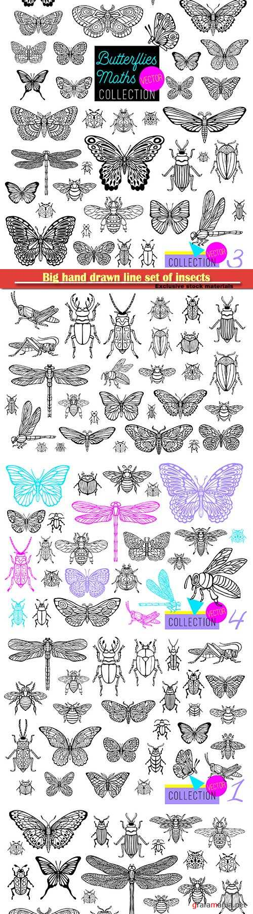 Big hand drawn line set of insects, beetles, honey bees, butterfly moth, bumblebee, wasp, dragonfly, grasshopper