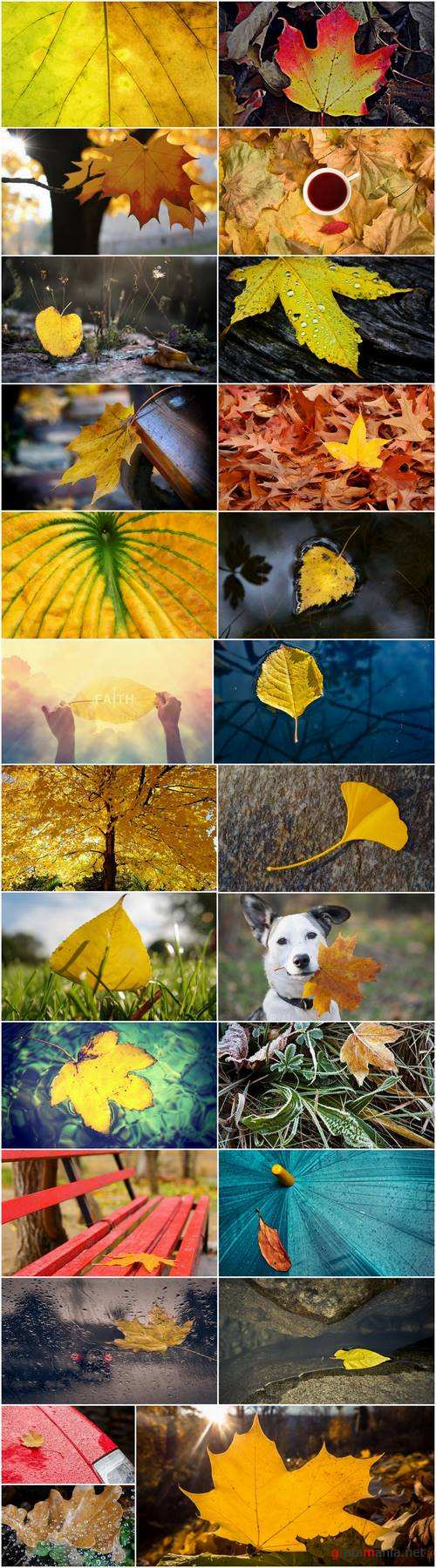 Yellow leaf close-up image background is rain forest nature landscape 25 HQ Jpeg