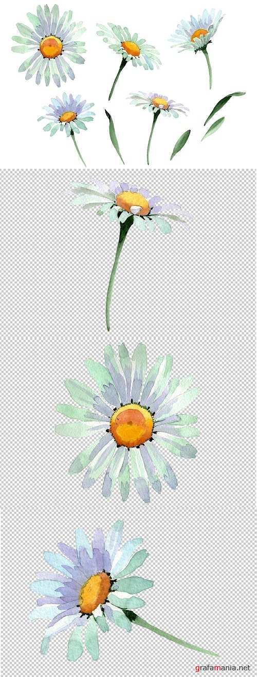 Big white chamomile Watercolor png - 3472882
