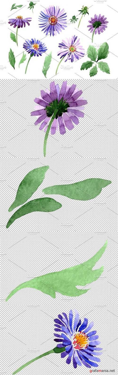 Asters Watercolor png - 3486269