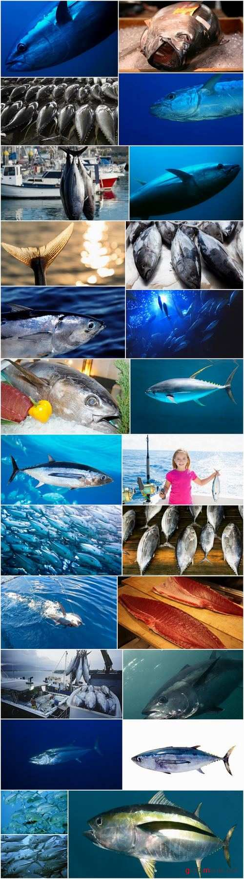 Tuna raw fish catch production of red meat 25 HQ Jpeg