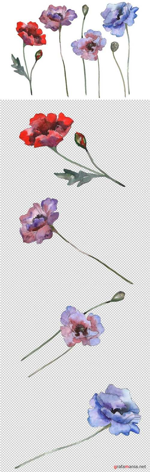 Poppy 1 Watercolor png - 229877
