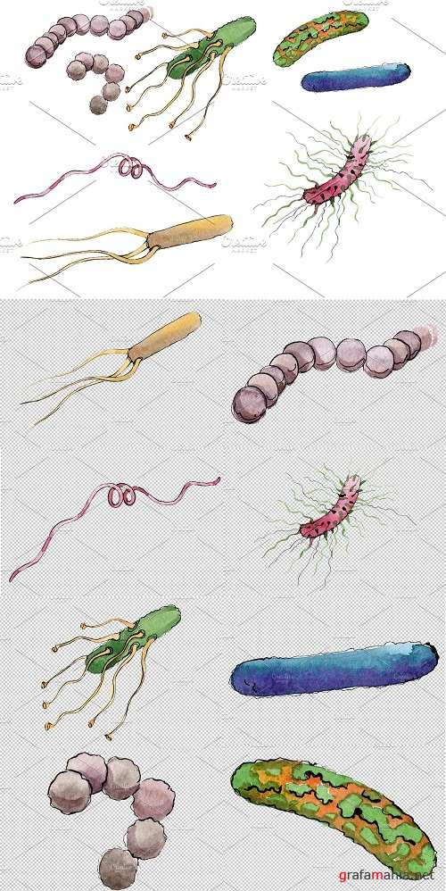 Microbes 1 Watercolor png - 3584076