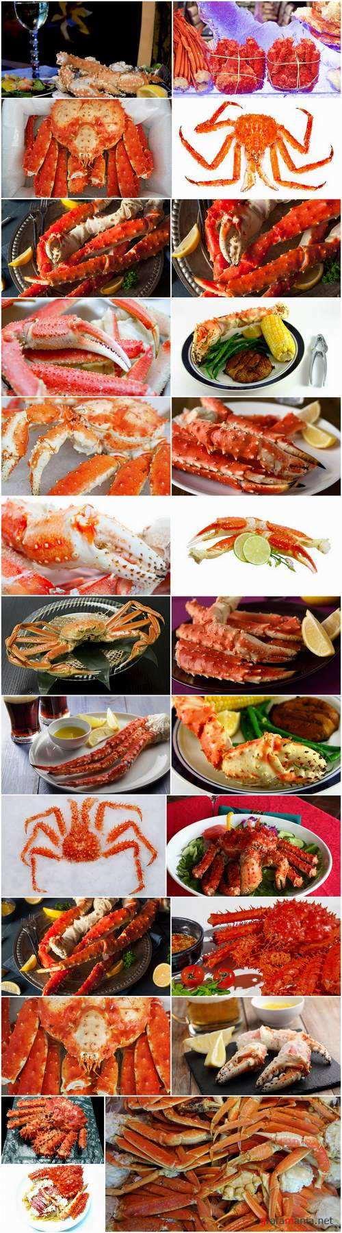 King crab claw seafood delicacy 25 HQ Jpeg