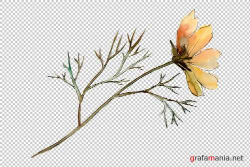Cosmos flower PNG watercolor set - 3100218