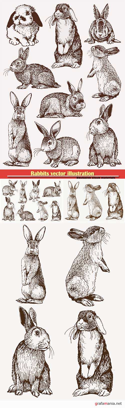 Rabbits vector illustration