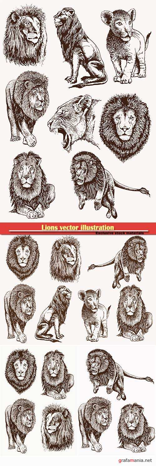 Lions vector illustration