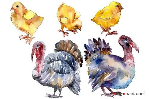 Agriculture: Turkey, chicken Watercolor png - 3785321