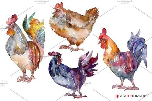 Agriculture: cock, hen Watercolor - 3785383