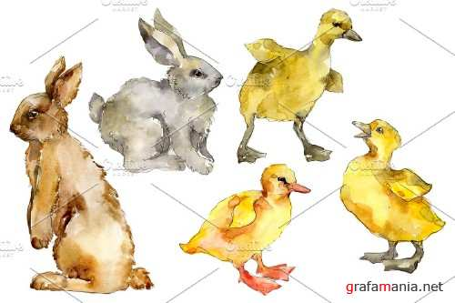 Agriculture: Rabbit, ducklings - 3784383