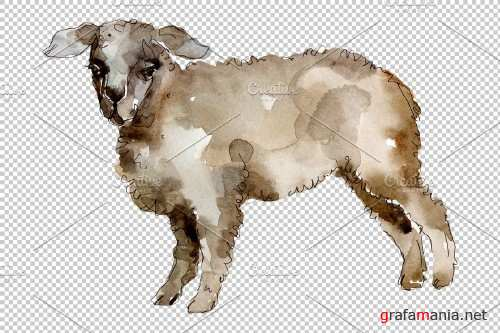 Agriculture:sheep, ram Watercolor png - 3784238