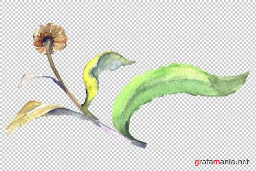 Daisy/chamomile Watercolor png - 3797902