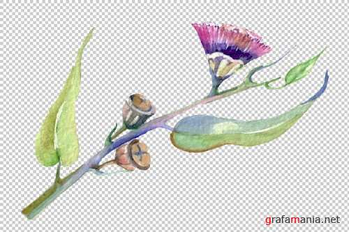 Eucalyptus watercolor plant png - 3798911