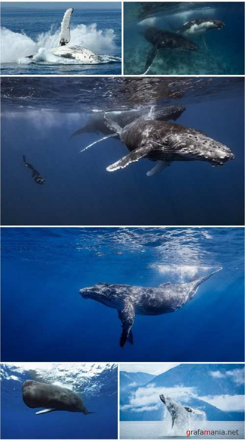 Whale hd wallpaper collection