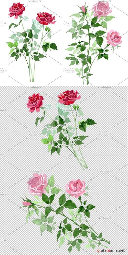 Bush of Roses pink and red - 3819651