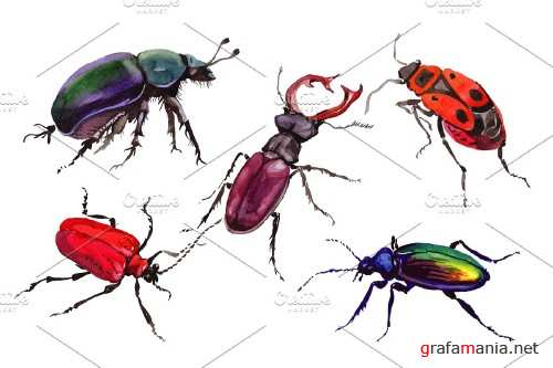 May beetle ordinary watercolor png - 3837345