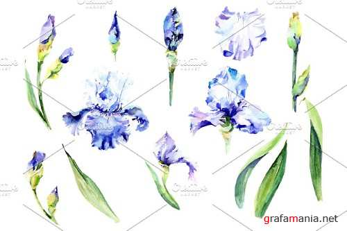 Irises blue Summer sky watercolor - 3836980