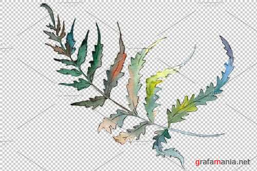 Polypodiopsis fern watercolor png - 3899081