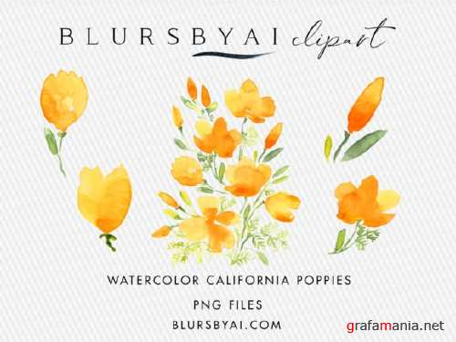 Watercolor California Poppies Clipart