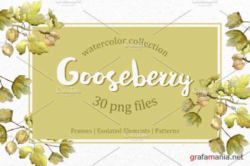 Watercolor Gooseberry PNG collection - 3931785