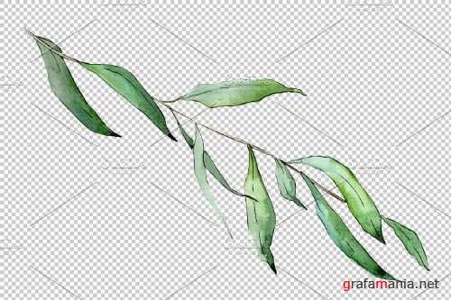 Willow branches Watercolor png - 3950883