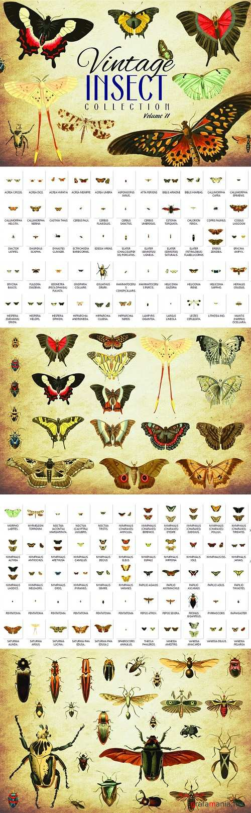 110 Vintage Insect Vector Graphics 2 - 3481948