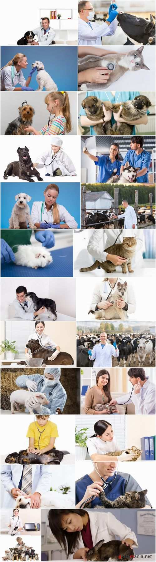 Different veterinarian 25 HQ Jpeg