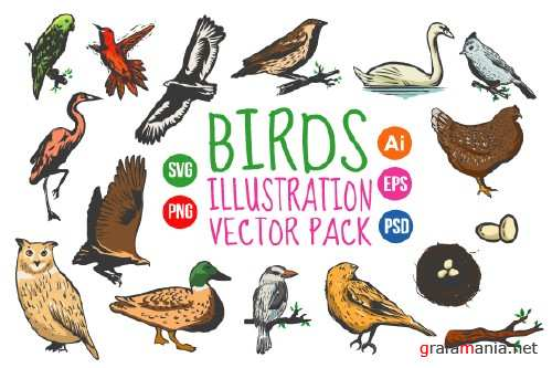 Birds Vintage Hand Drawn Vector Pack