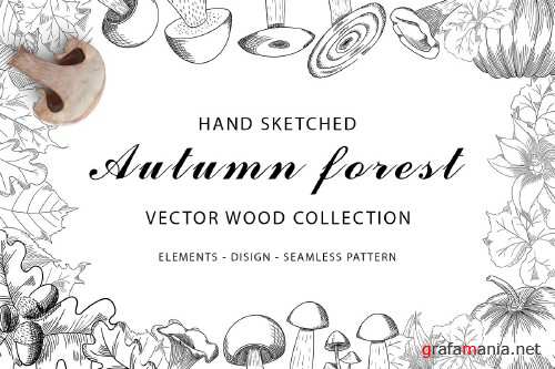 Autumn forest vector wood collection - 4010548