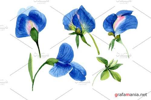 Sweet pea blue Watercolor png - 3997221