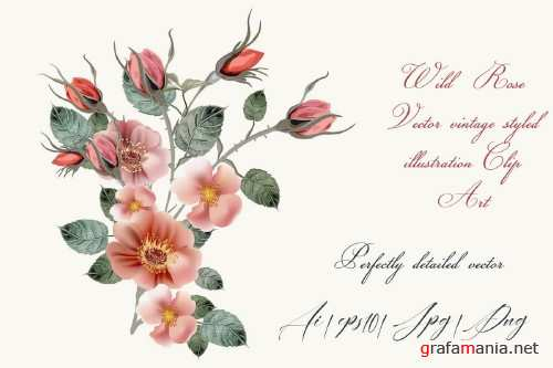 Vintage wild rose, high detailed vector rose illustration - 318524