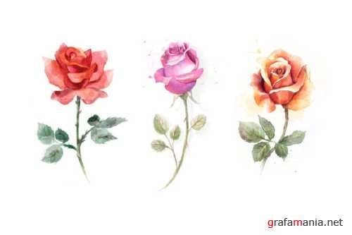 5 watercolor roses 53256