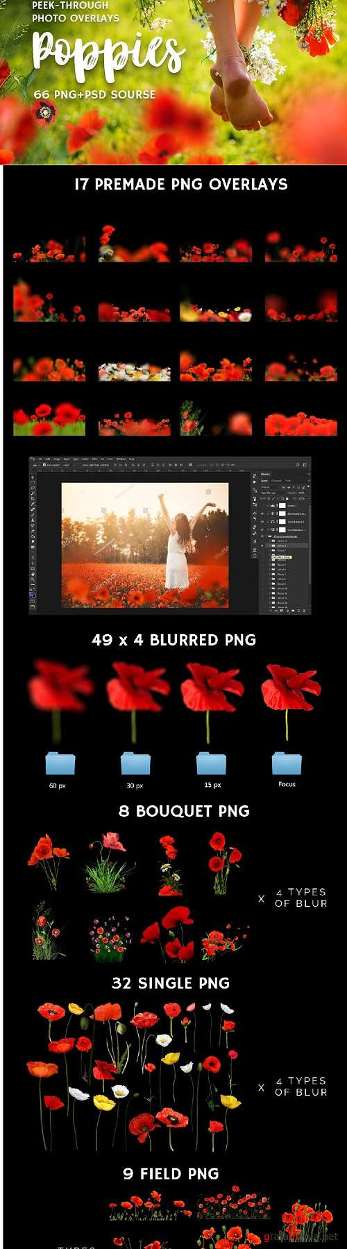 66+ Poppie Flowers Photo Overlays - 3019112
