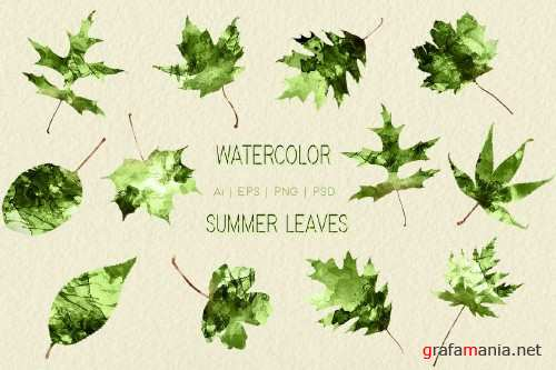 Watercolor Summer Leaves Graphics - 258512
