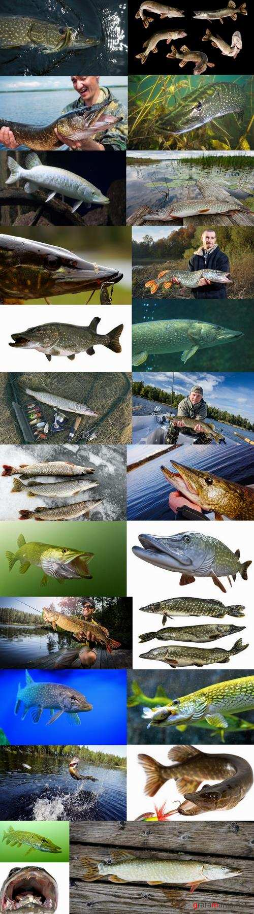 Trophy pike fishing mining 25 HQ Jpeg
