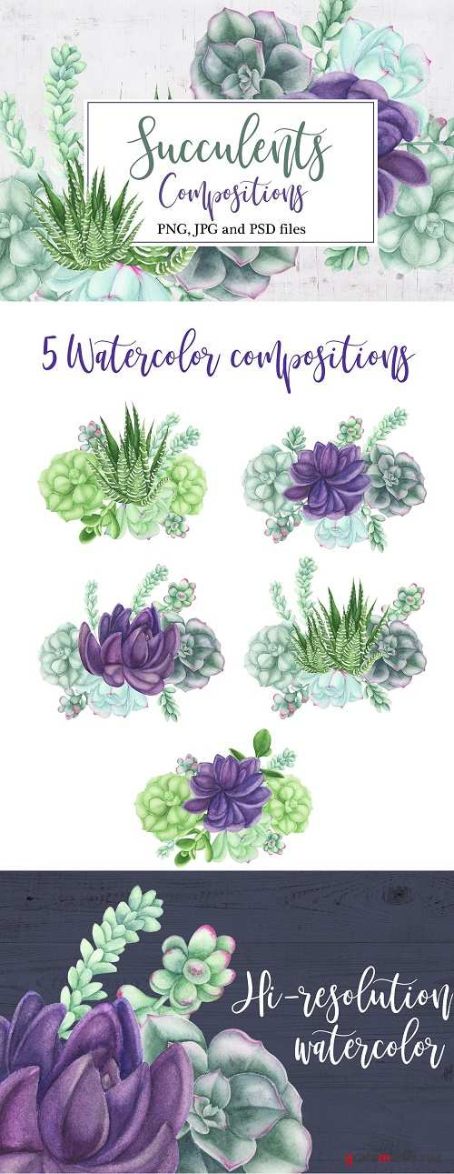 Watercolor Succulents Compositions - 3707649